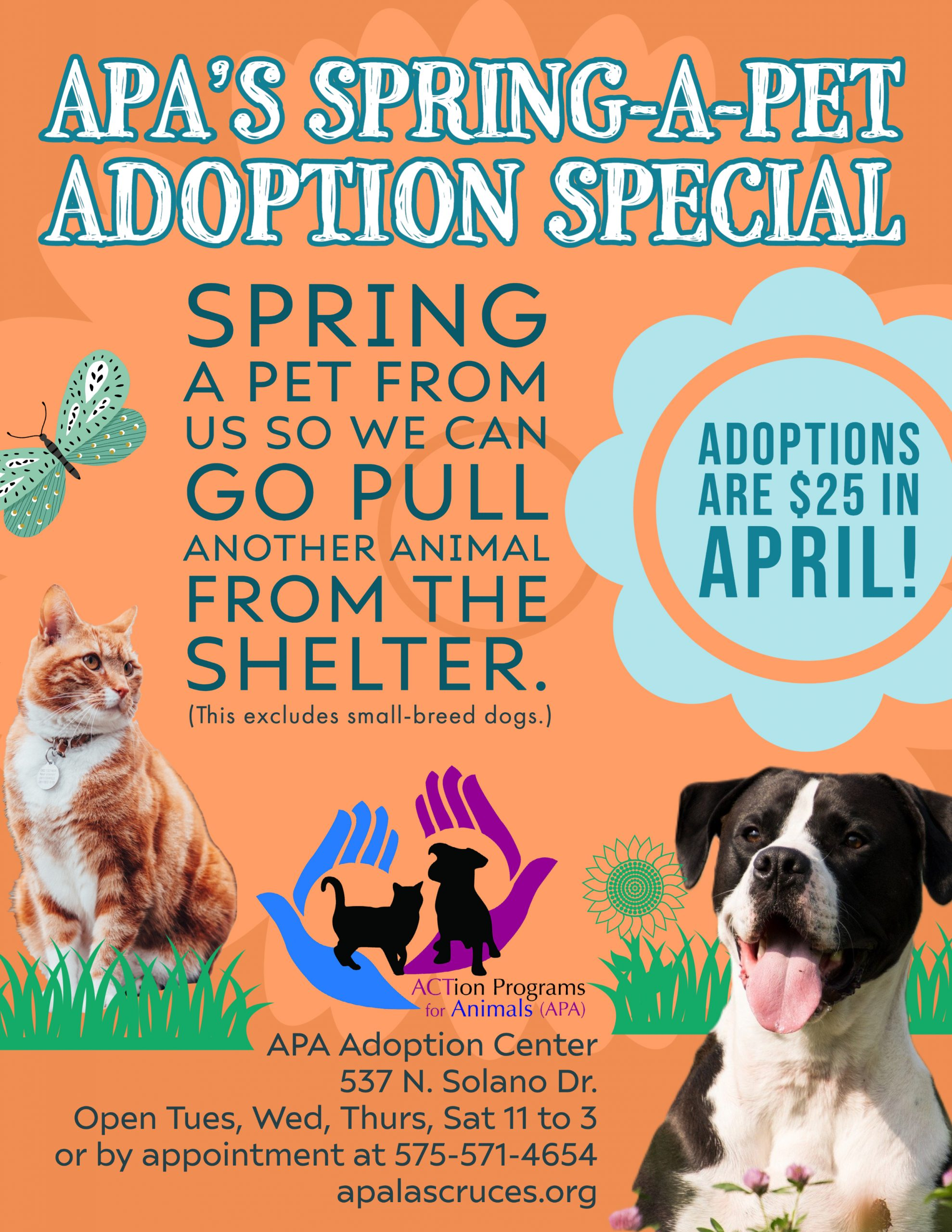 APA Spring Adoption Special